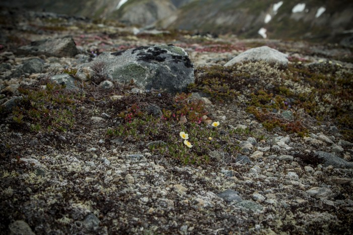 Chilkat Pass