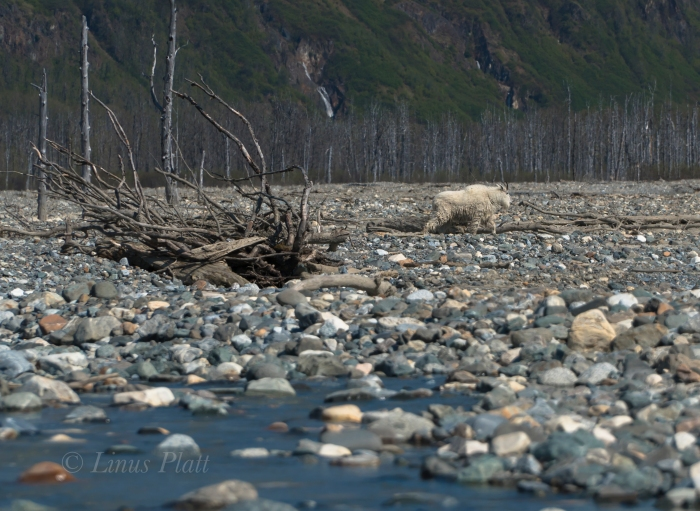 Takhin River 2018-36