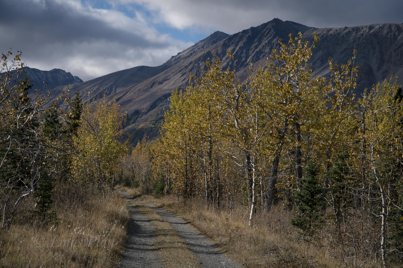 Golden Yukon-12