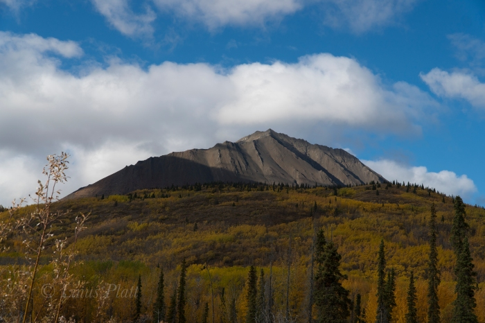 Golden Yukon-15