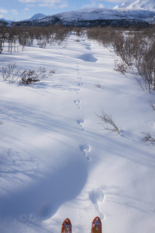 Parton River Ski-2