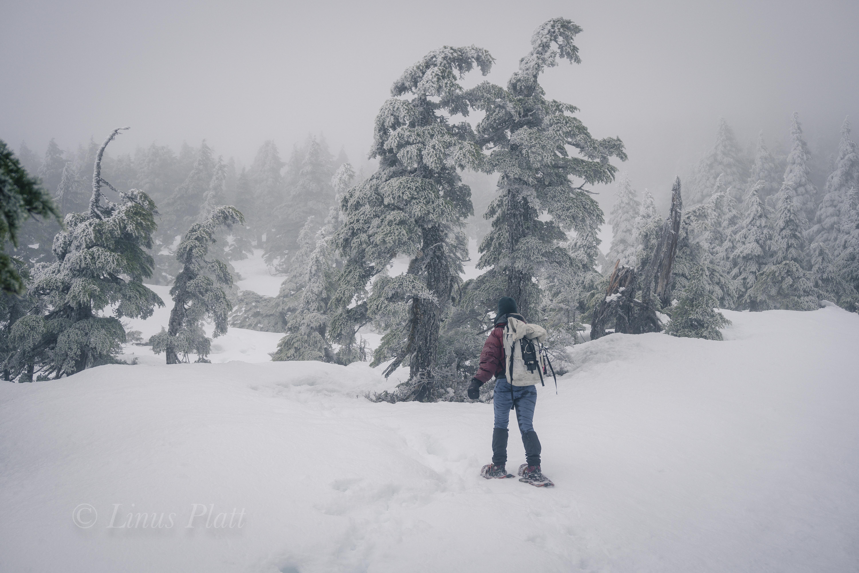 Winter Ripinski-6