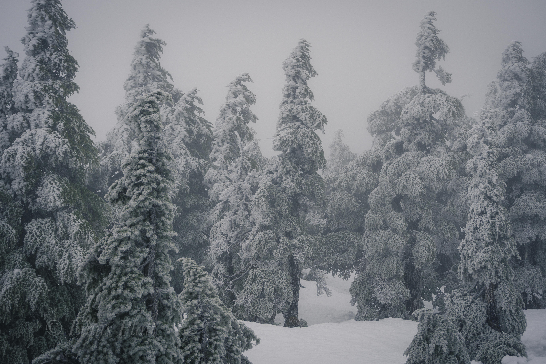 Winter Ripinski-7
